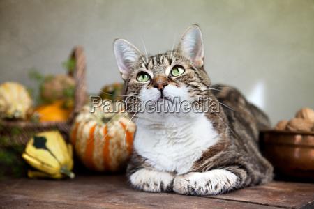 autumn image with cat