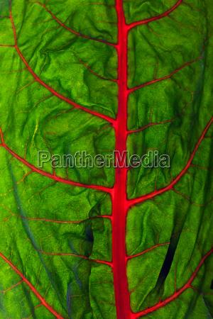 verde vegetal crudo vena pagina beleucht