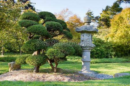 stone lantern and pruned bonsai tree
