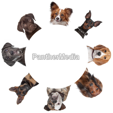 group of dog portraits around a