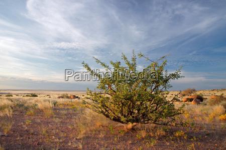 desert plant and sky