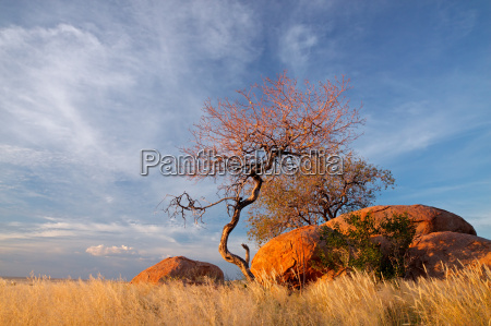 granite boulders and trees