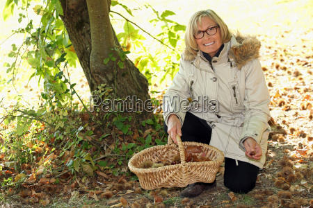 woman gathering chestnuts