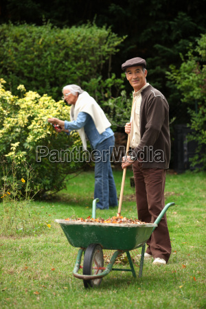 elderly couple gathering leaves