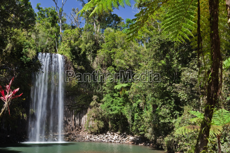 tree fern and waterfall in tropical