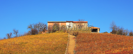 panoramic view on hill vineyards and