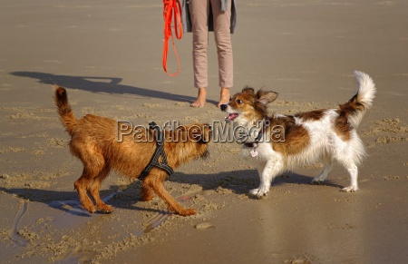 dogs on the beach in the