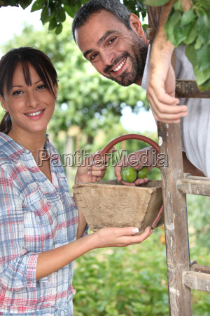 couple picking plums