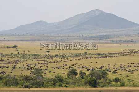 the great migration in the masai