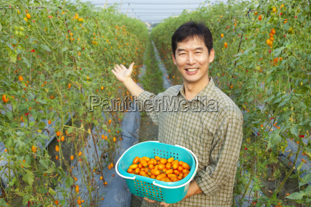 successful asian farmer holding tomato on