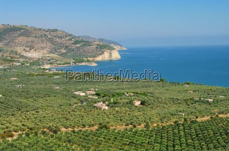 gargano olive plantation gargano olive