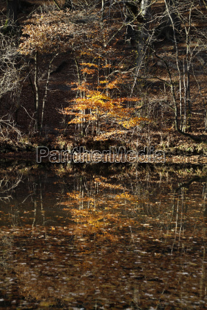 autumn forest with pond