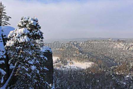 tree trees winter winter landscape snow