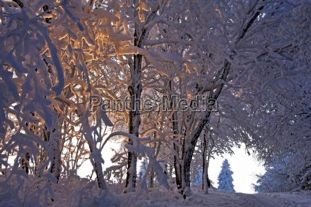 winter sunset evening winter landscape path