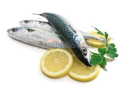 three mackerel with lemon and parsley
