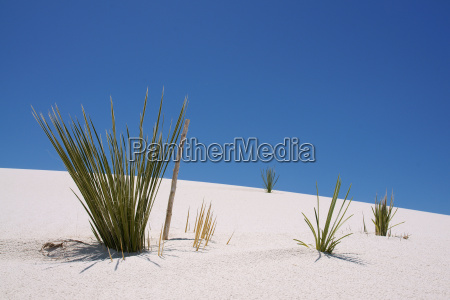 plant on a sand dune in
