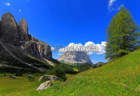 tree mountains dolomites alps scenery countryside