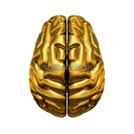 gold brain top view