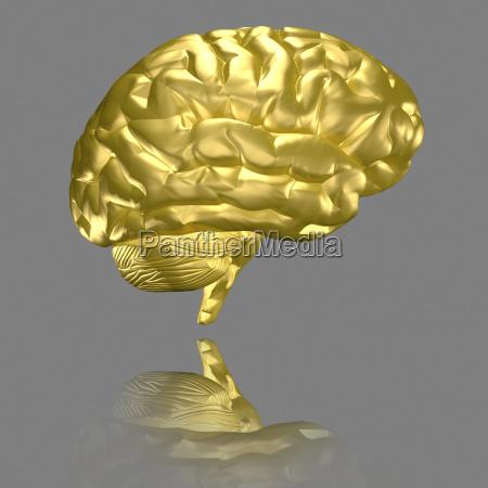 brain gilded