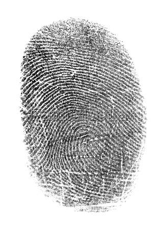 black fingerprint isolated on white