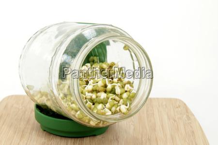 mung bean seedlings in the seed