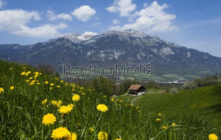 spring landscape in mountains apls