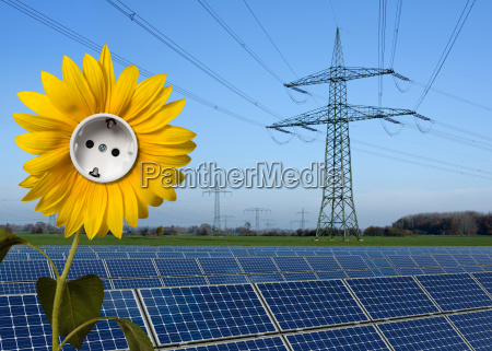 solar park sunflower with electricity socket