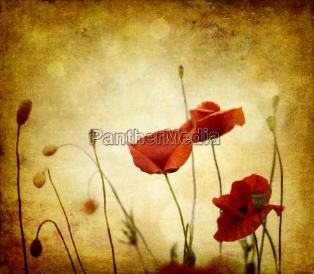 red retro poppies on light texture