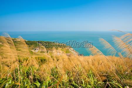 matsu juguang island tall grass h