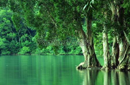 paper bark tree near the reservoir
