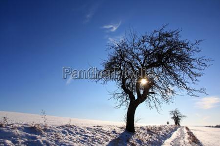 tree winter apple tree winter landscape