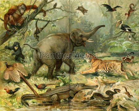 various wild animals south east asia