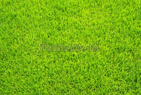 fussballrasen soccer grass