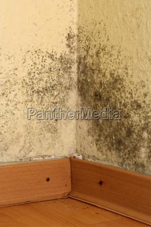 mold in corner of room