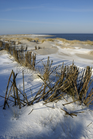 branches in the dunes at the