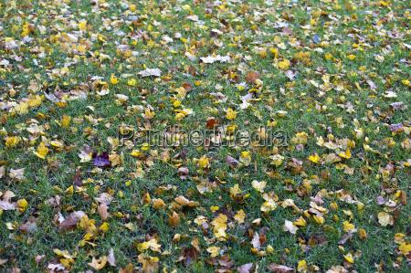 autumnal lawn