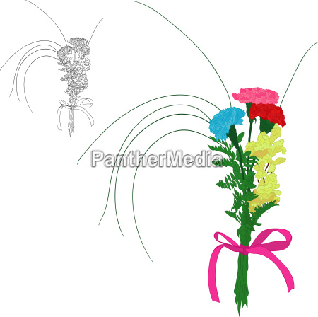 three color carnations