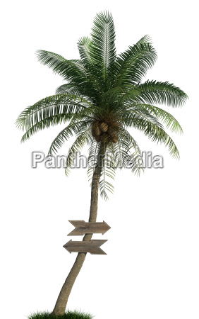 palm tree and wooden arrows