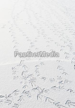 bird trails in snow