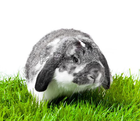 adorable rabbit isolated on a white