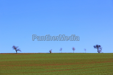 blue tree trees agriculture farming field