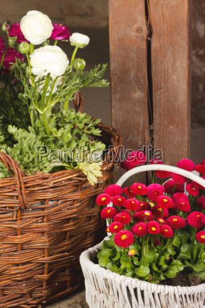 baskets with daisies and buttercups