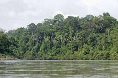 jungle rainforest