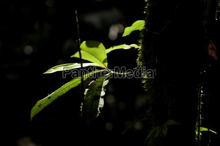 counter light urwaldbaum braulio carillio costa