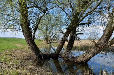 in the national park lower oder