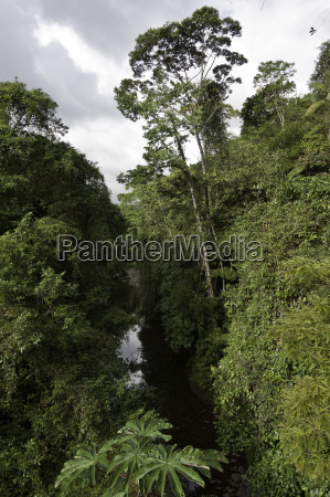 rainforest rain forest river water costarica