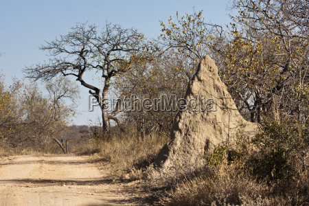 termite mound in the greater kruger