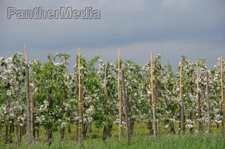 bloom blossom flourish flourishing agriculture farming