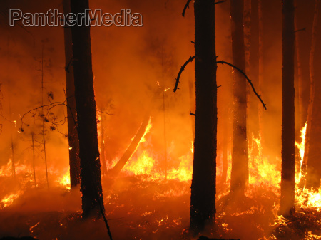 disaster with fire in the forest