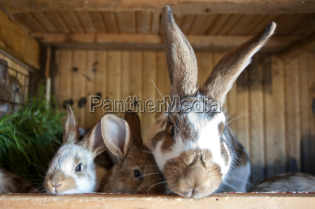 bunnies in the stable
